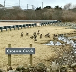 02-2018 Crossen Creek Sign & the first guests The Geese