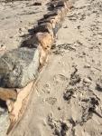 Gabriel Milne 11-01-17 2 Surf Drive Beach IMG_6341