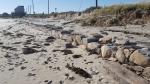 Rebecca Bevilacqua Beach Erosion 10-31-17 Mill Rd 1 150426